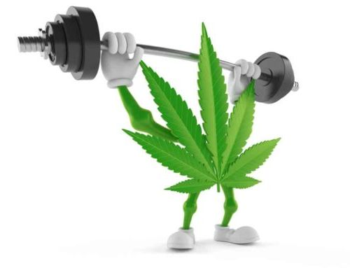marijuana-workout-supplement-1